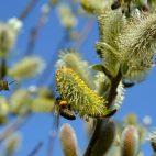 Ce nu stiai despre Duminica Floriilor – traditii si superstitii de respectat