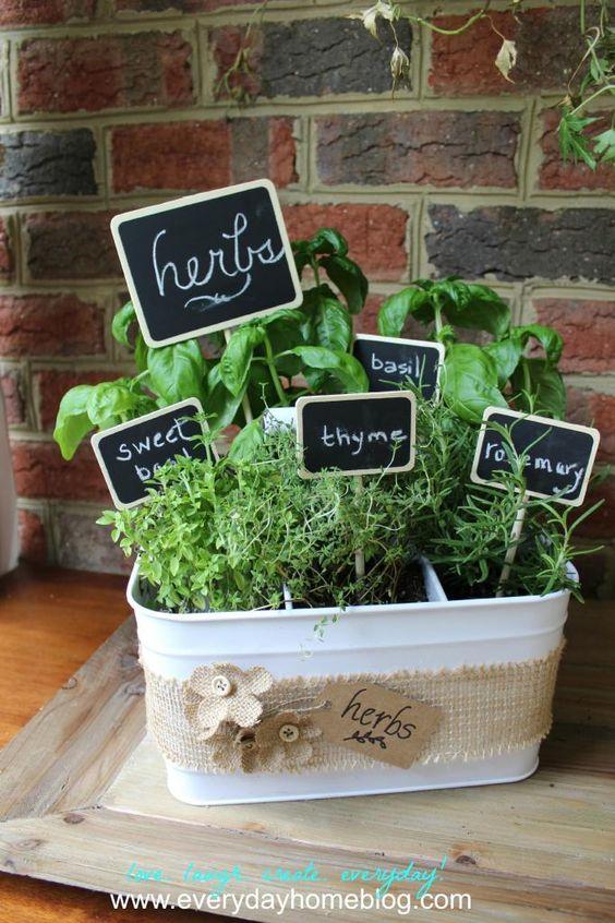 plante10