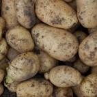 Cum alegem cei mai buni cartofi